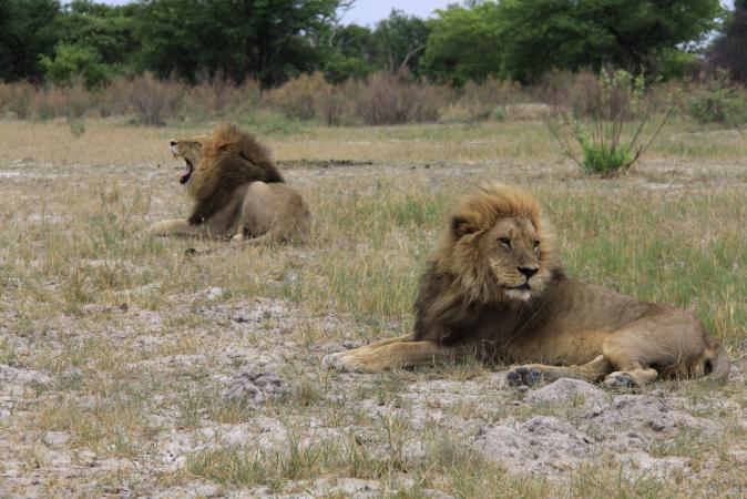 Experience Reise nach Botswana
