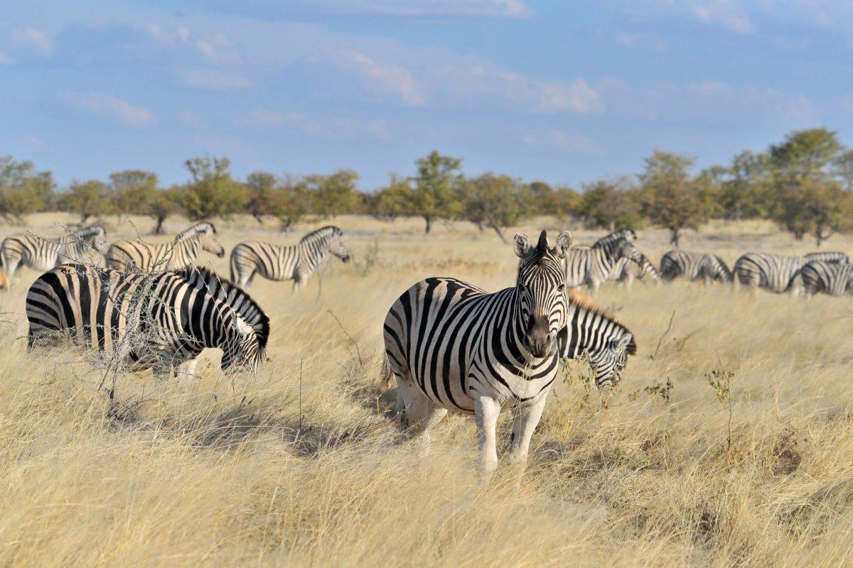 ExperienceReise nach Botswana und Namibia