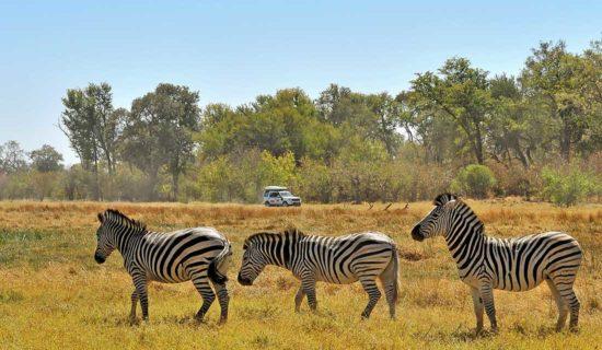 Experience Reise nach Botswana und Namibia