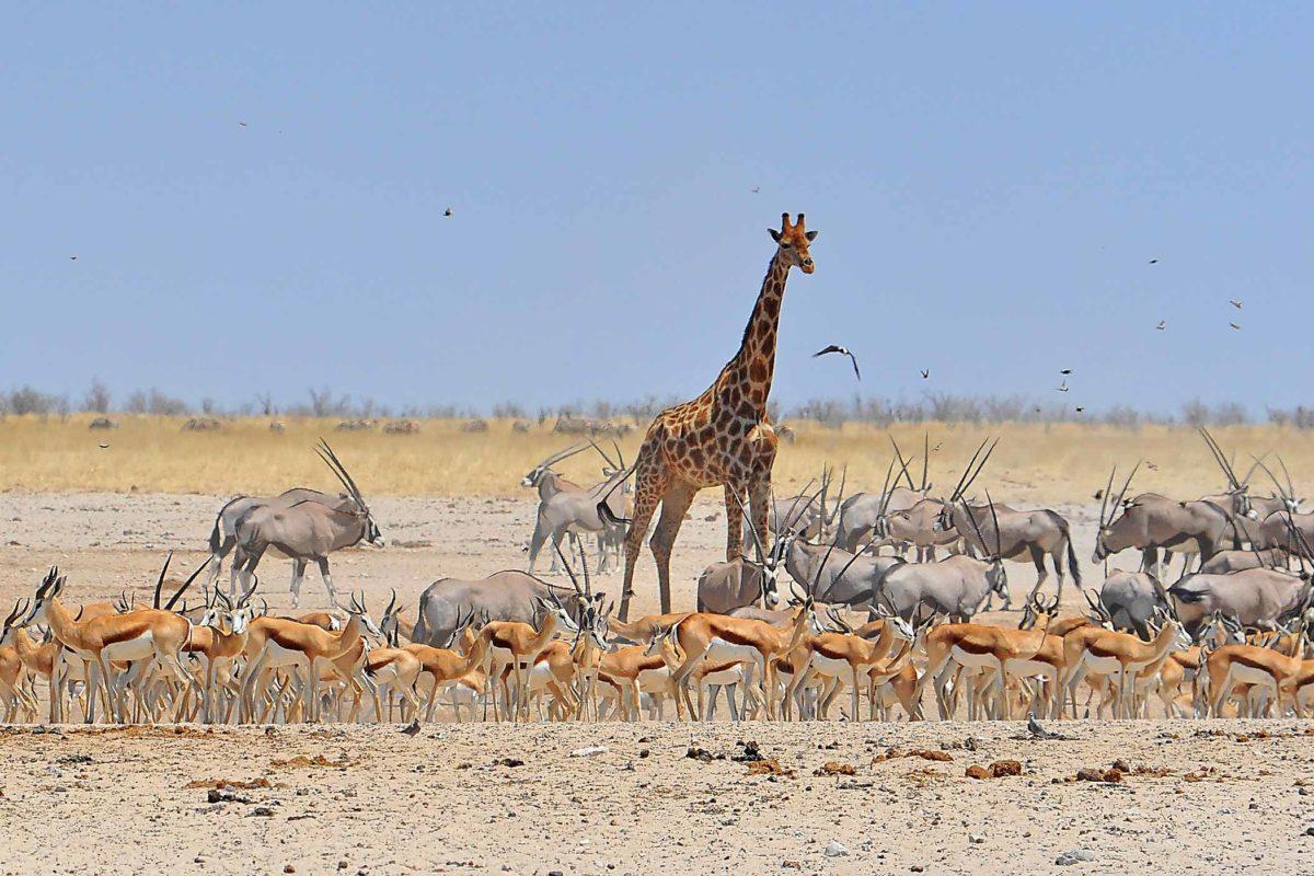 ExperienceReise nach Namibia
