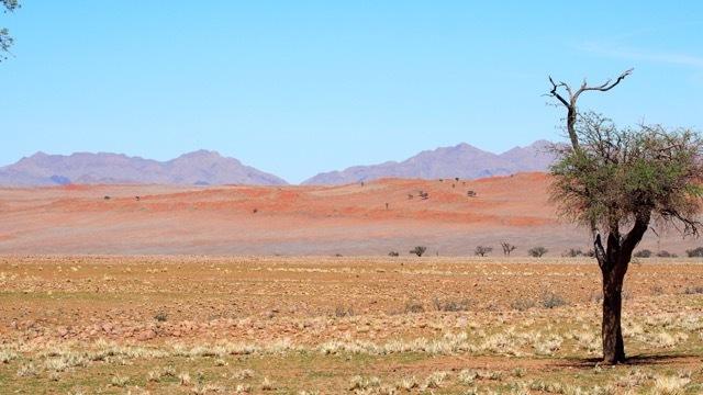 Wunderschöne Wüstenlandschaft, Namibia © Foto Sabine Lueder