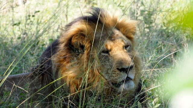 Hwenge Nationalpark Simbabwe, Foto Sabine Lueder